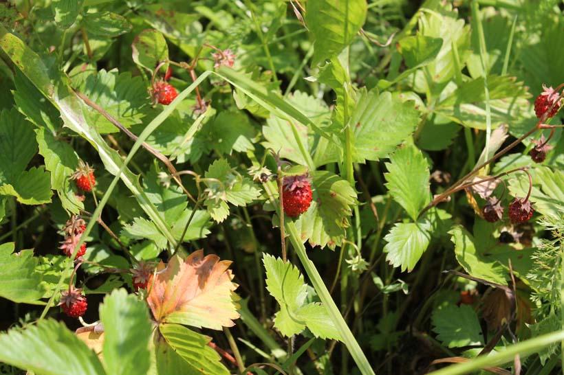 Великолепная природа: грибы, ягоды, охота и рыбалка